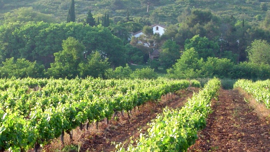Xatonada i tast de vins al Parc Natural del Garraf