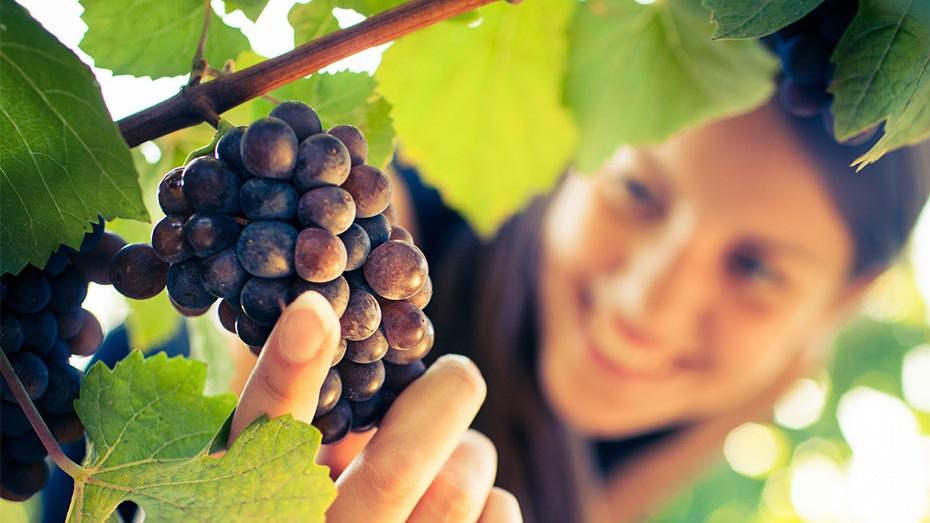 Passeig per les Vinyes i Tast & Go a Bodegues Sumarroca