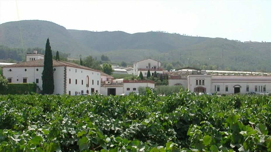 Visita a Bodegues Sumarroca & Pa amb tomàquet i embotits a peu de vinya