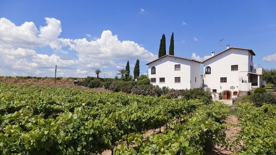 Regala un Brunch entre vinyes als Cellers Carol Vallès
