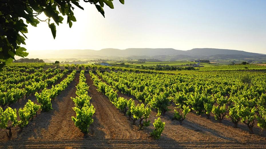 Visita Premium a Vins i Caves Cuscó Berga