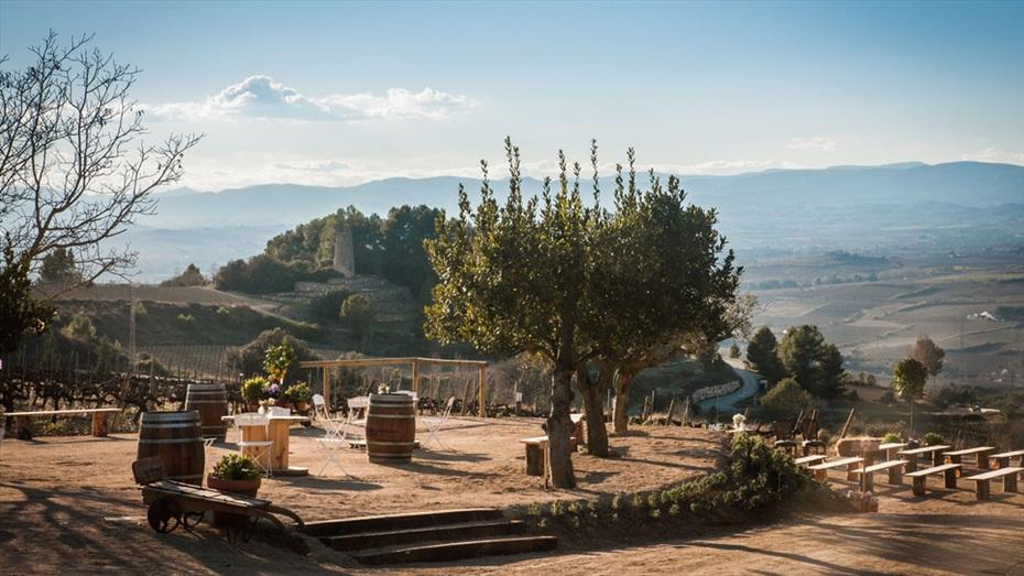 Passejada entre vinyes, amb esmorzar maridat i visita guiada a Vins i Caves Cuscó Berga