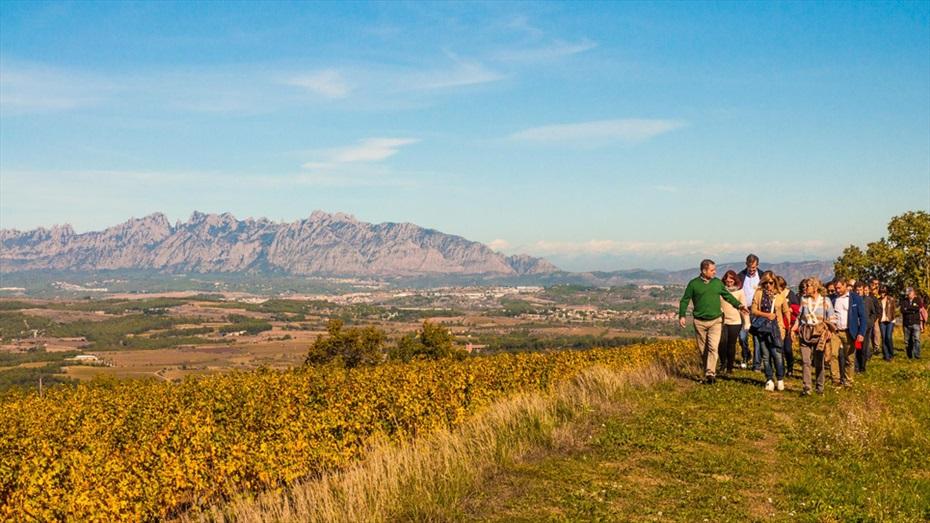 Regala una passejada entre vinyes, amb esmorzar maridat i visita guiada a Vins i Caves Cuscó Berga