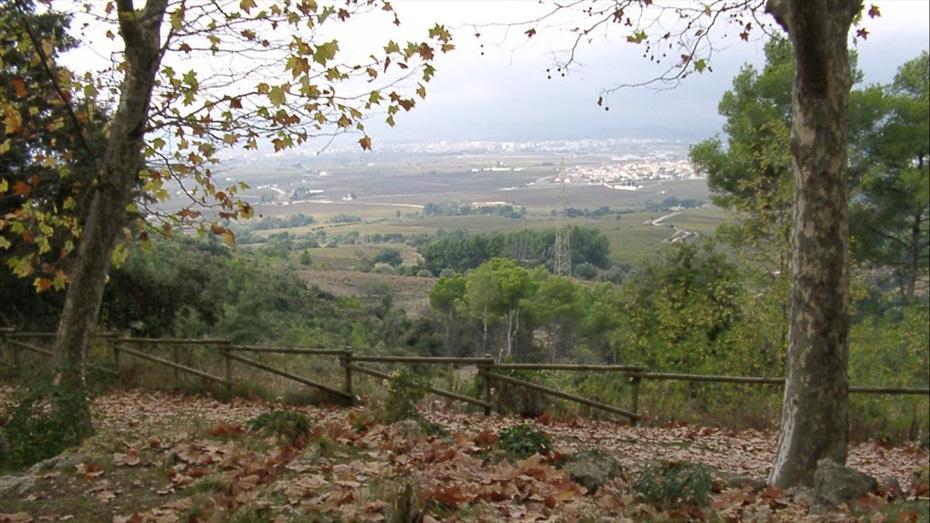 Ruta verda a Vins i Caves Cuscó Berga