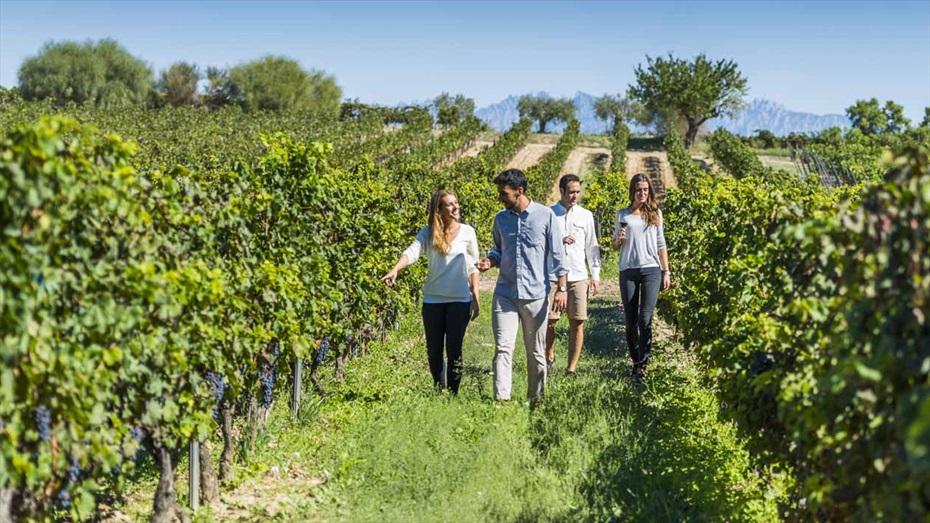 Maridatge de 4 vins i 4 pernils ibèrics + Visita al celler