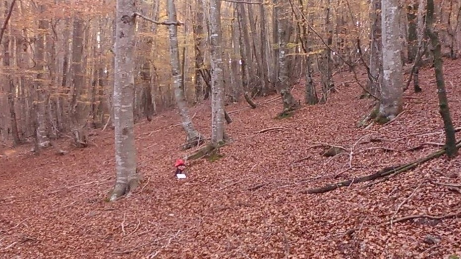 Vine a caçar el Tió de Nadal i gaudeix d'un bon dinar amb el 10% de descompte