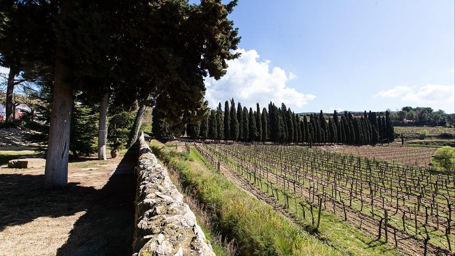 Descobreix l'Origen: Visita al celler Albet i Noya, tast de vins in-situ i menú degustació