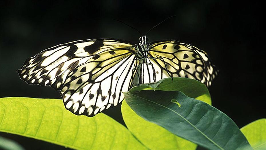 Fotografia de natura i macro