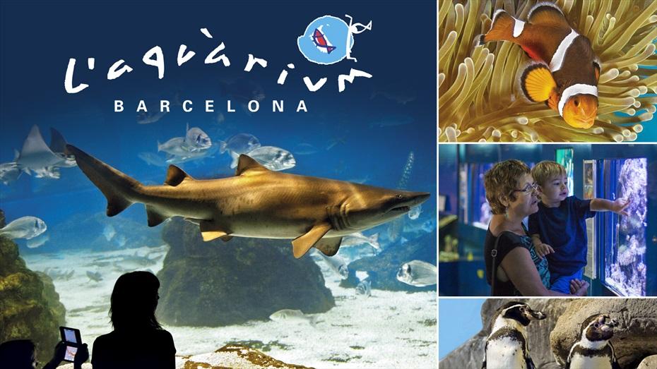 Sorteig Family pack Aquàrium de Barcelona