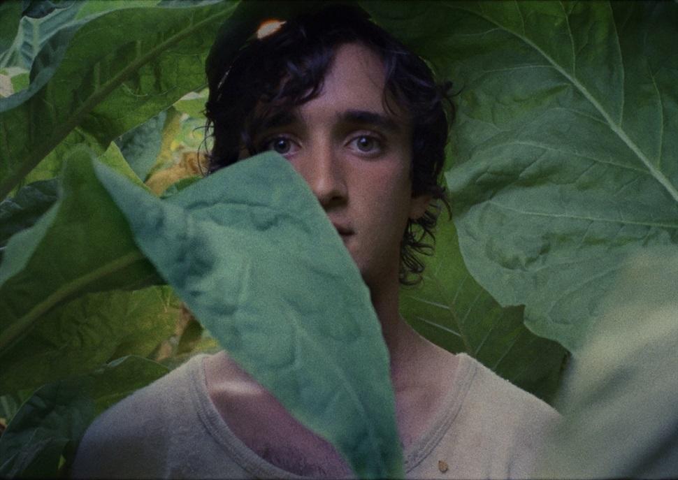 Cinema Boliche: Lazzaro feliz